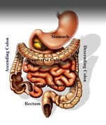Colon_with_labels_2